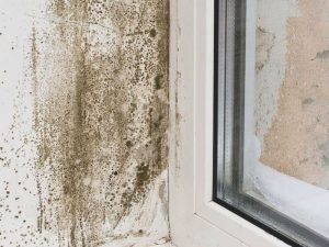 Mold growing around window sill