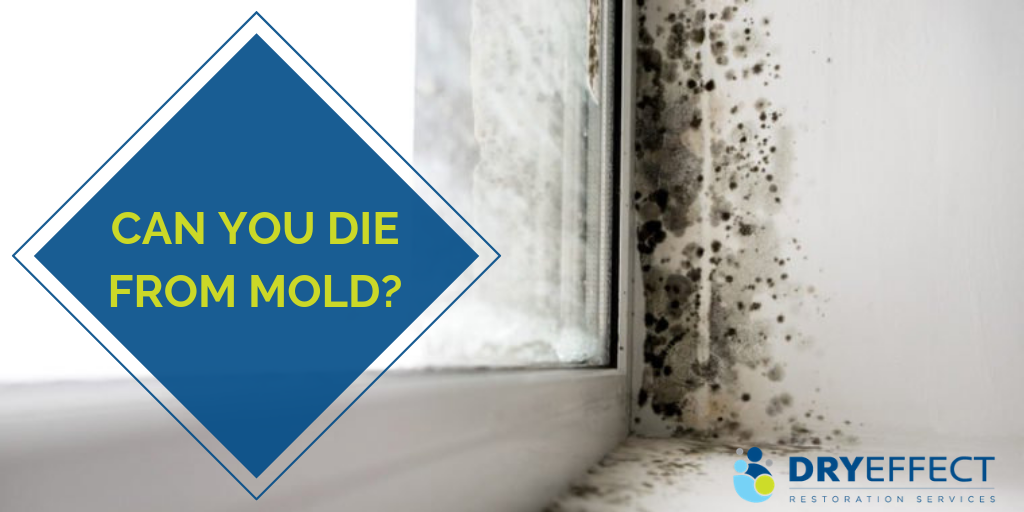 Can you die from Mold - DryEffect