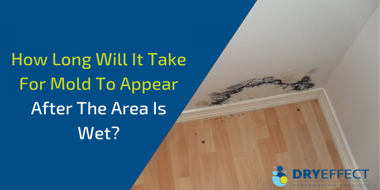 Mold Growth | How Long Does it Take for Mold to Grow?