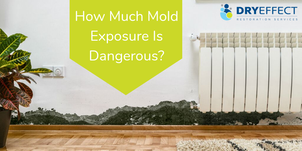 How Much Mold Exposure Is Dangerous?