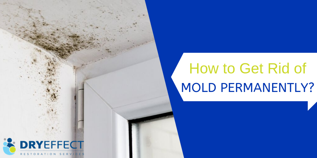 How to Prevent Mold Growth?