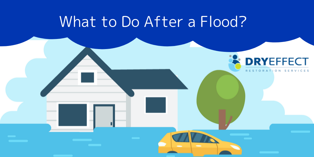 What to Do After a Flood?