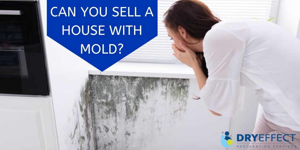 Can you sell a house with mold?