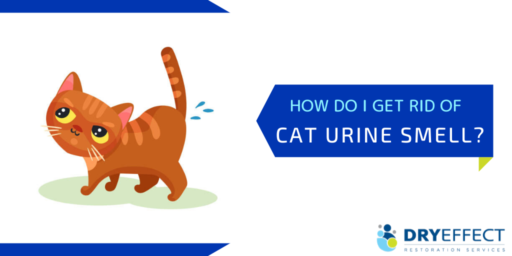 How Do I Get Rid of Cat Urine Smell in my House?