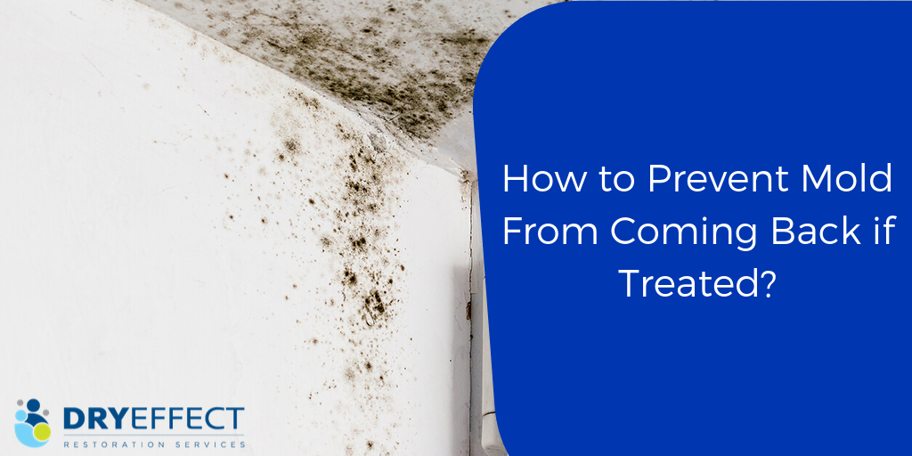 How to Prevent Mold from Coming Back if Treated?