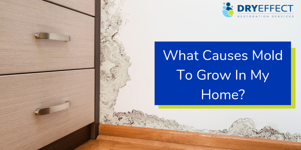 What Causes Mold to Grow in my Home?