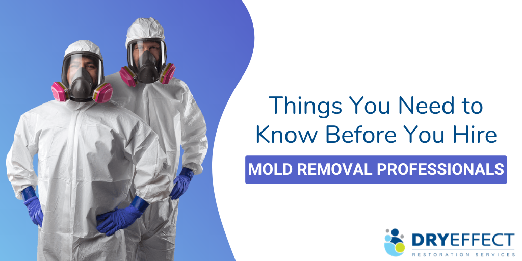 Things You Need to Know Before Hiring Mold Removal Professionals