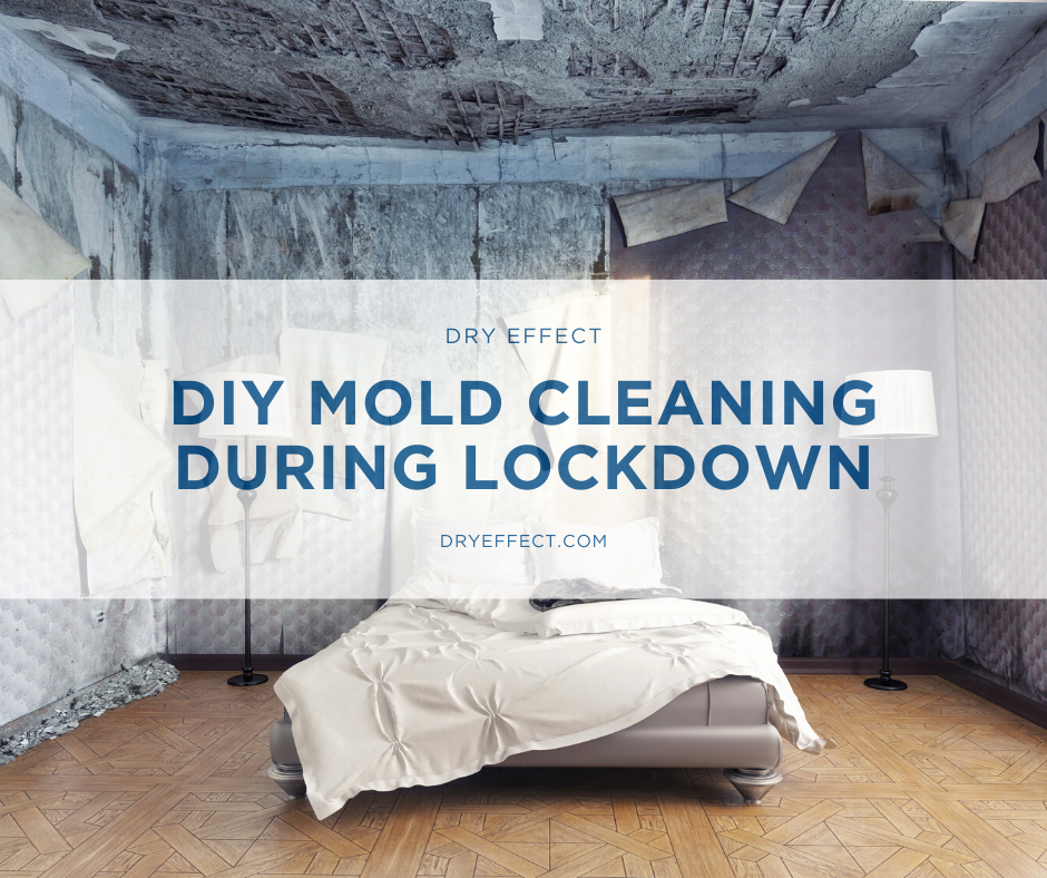 DIY Mold Cleaning During Lockdown